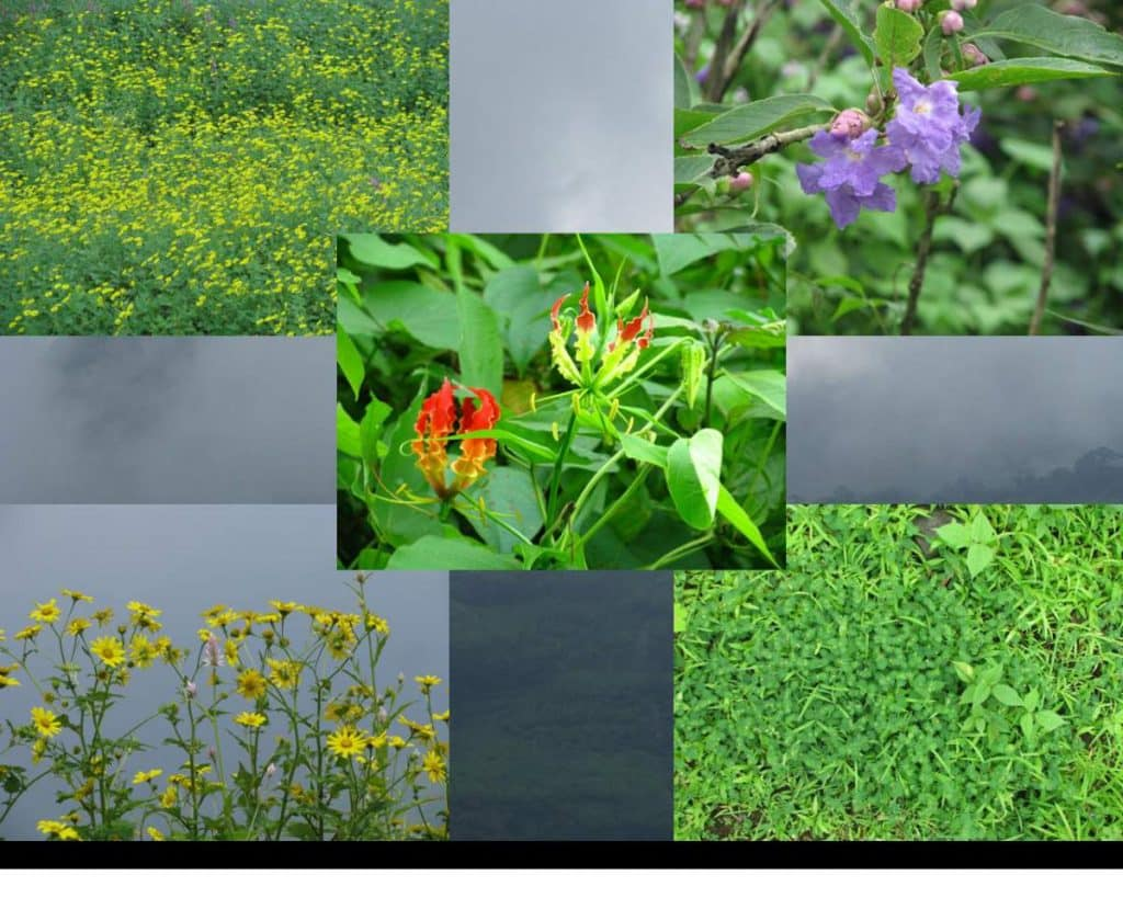 beautiful wild flowers at kalavantin durg 1