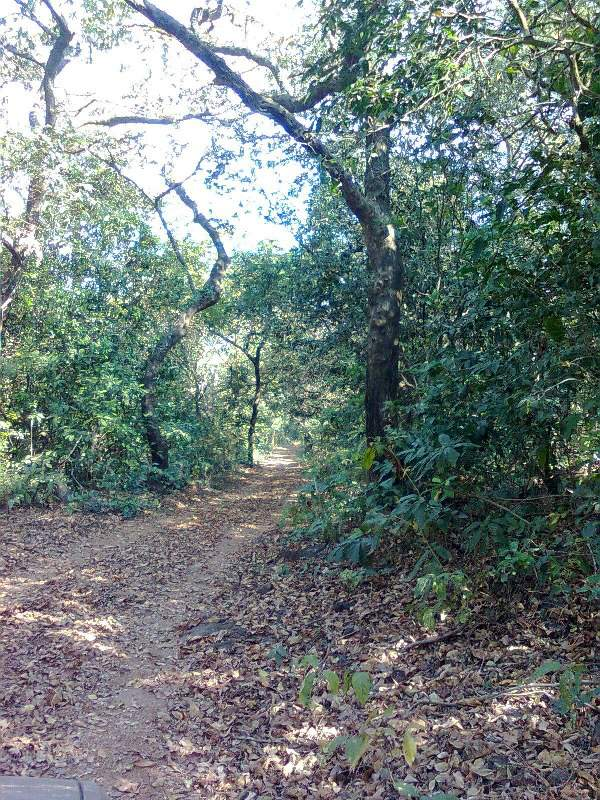 Phansad Sanctuary - dense forest