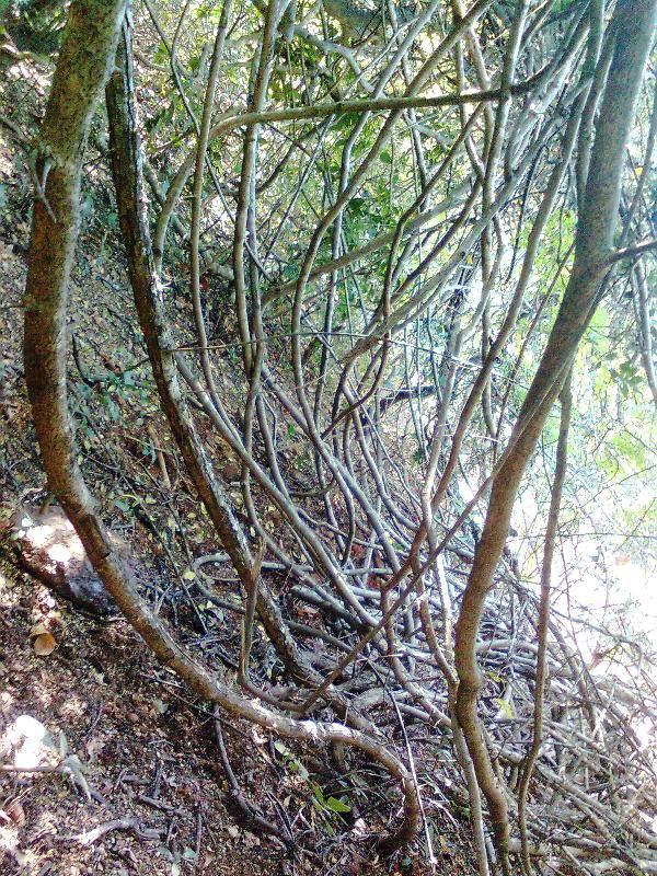 dense forest at phansad