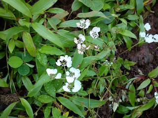 valley of flowers maharashtra