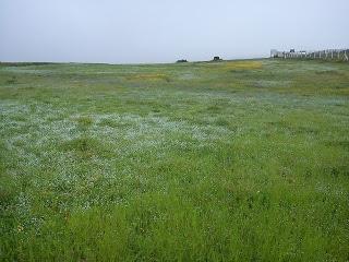 flowers at Kaas plateau
