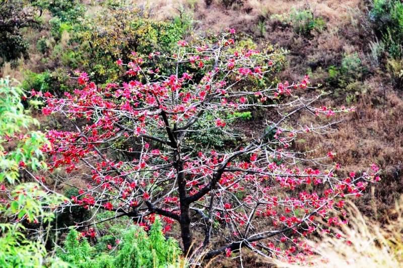 red wild flowers