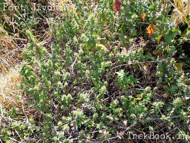 thorny shrubs prick your legs