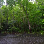 Meandering the Manchac Swamp in Louisiana