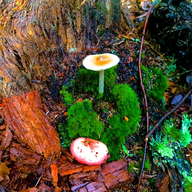 quebec_mushrooms