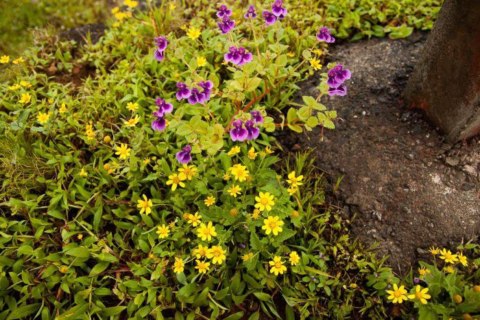 More Wild flowers at Kaas