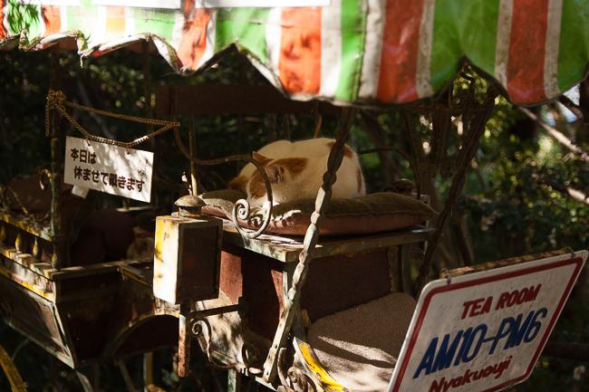 Cats rest on an antique hand cart