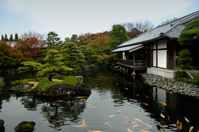 Fish swim in a pond at the Himeji Kokoen