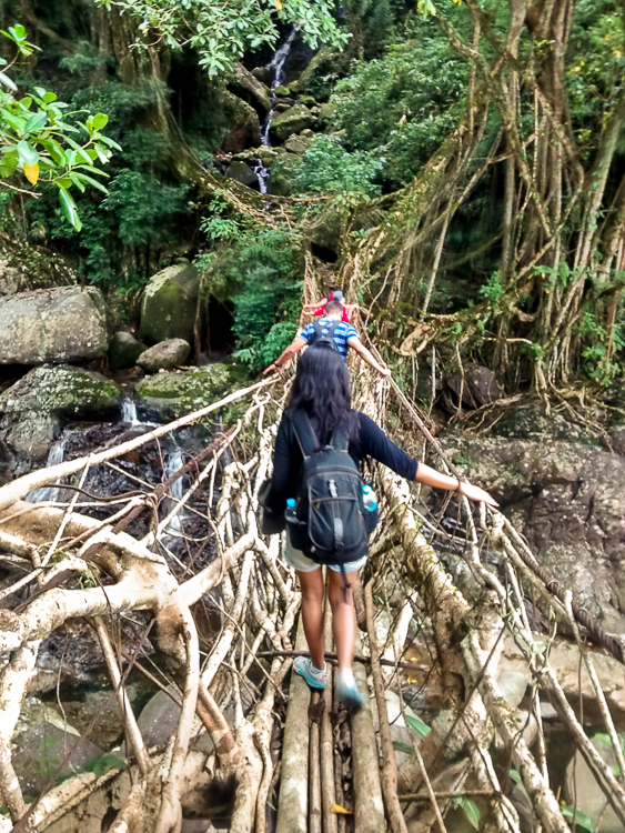 We cross what looks like root bridge taking root, on our way to the Rainbow falls