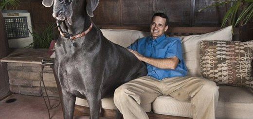 Tallest dogs in the world - Only for dog lovers