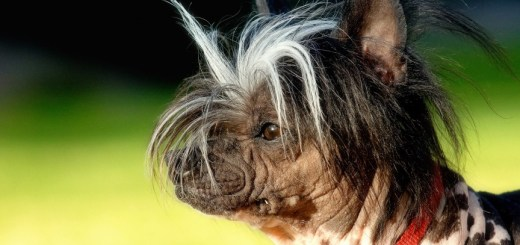 10 ugly breeds of dogs in the world