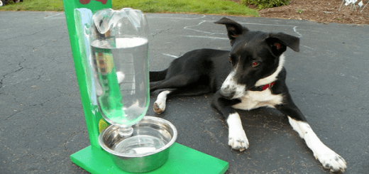 9 Brilliant and effective tricks every pet owner must know