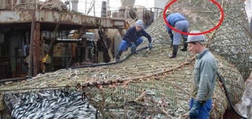 When fishermen haul up their net full of fish they never in the least expected to find this inside