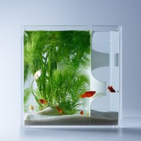 Waterscape By Haruka Misawa Looks Into The Aquatic Life