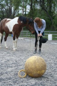 Taking small steps to get Blitz to target the ball when he first came to live with me. May 2008