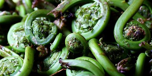 Ramps, fiddleheads, fava beans and other spring vegetables about which people are freaking out
