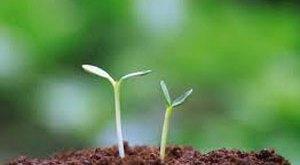 Phân trùn quế- loại thích hợp cho trồng rau sach,an toàn