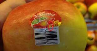 Trái cây có tem dán bắt đầu bằng số 8 nghĩa là gì?