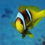 tropical-fish-wallpaper