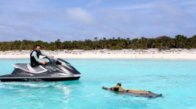 swimming_pig_and_jet_skiing