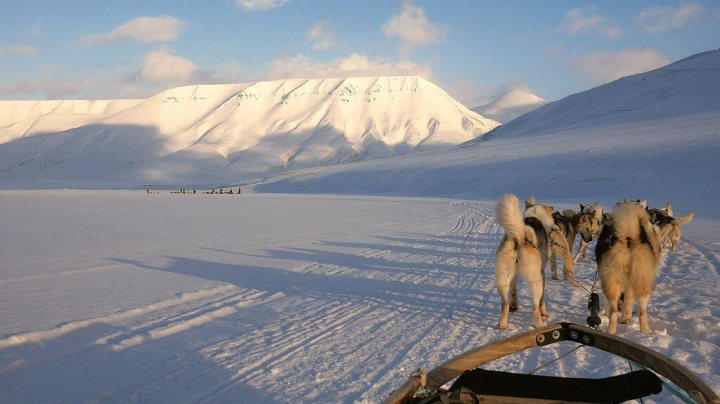 Spitzbergen, Norway, dogsled, travel, TropicsGourmet