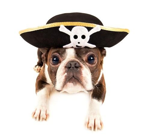 Medium Of Why Do Dogs Bury Bones