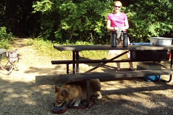 Camping_Corgi