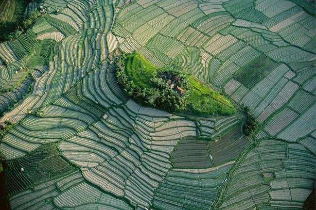 rizière agriculture