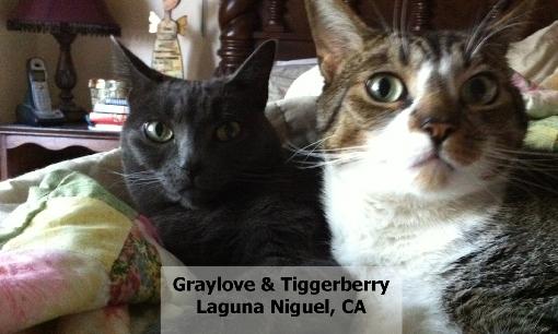 71GrayloveTiggerberry