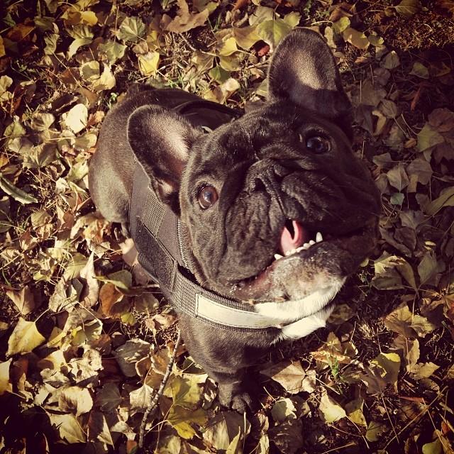 Őszi Watson - Watson d'automne