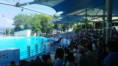 DSC 0660 500x281 のとじま水族館のイルカショーが楽しい♪宿泊は金波荘がおすすめ☆