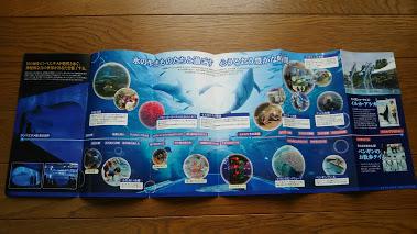 DSC 2706 のとじま水族館のイルカショーが楽しい♪宿泊は金波荘がおすすめ☆