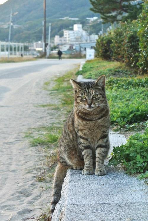 須磨海岸でであった。興味あるようで近づいてはくるけど、ツンデレ。