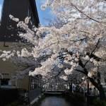見原洋子 2014春