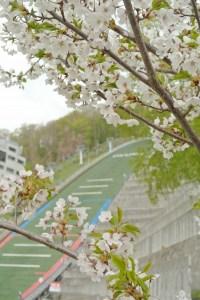 桜とジャンプ台
