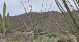 saguaro-national-park-east
