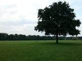 2015-08-30 18.10.47-Stadtpark-2