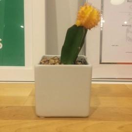 My cactus (Photo: TueNight)