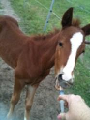 Paste2Foal