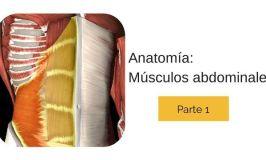 Anatomía de los Músculos Abdominales. Conócelos todos (I)