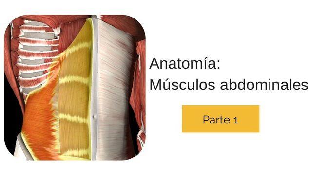 anatomia_abdominales_1