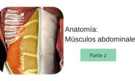 Anatomía de los Músculos Abdominales. Conócelos todos (y II)
