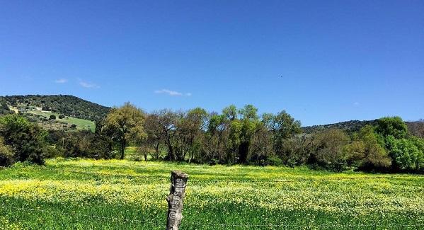 primavera post