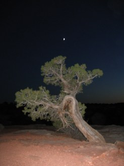 Tree at Deadhorse Point State Park