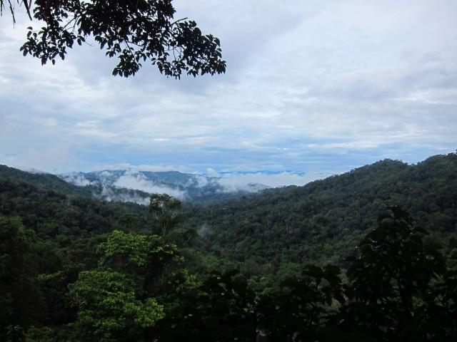 Misty Jungle Morning in Bokeo