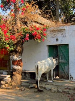 """Anyone home?"", Bundi"
