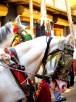Marriage Horses, Pushkar