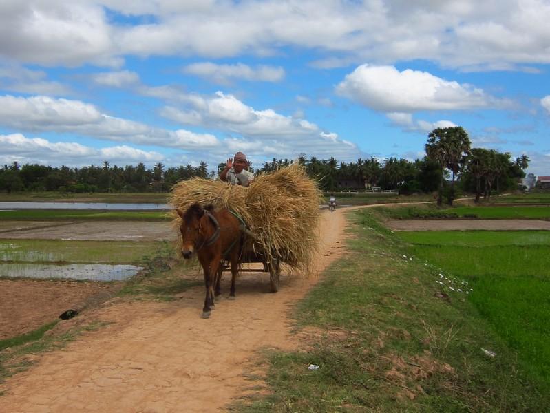 Farmer, Koh Trong