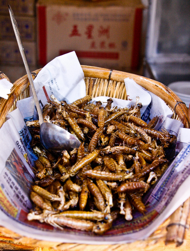 Insects in Yunnan