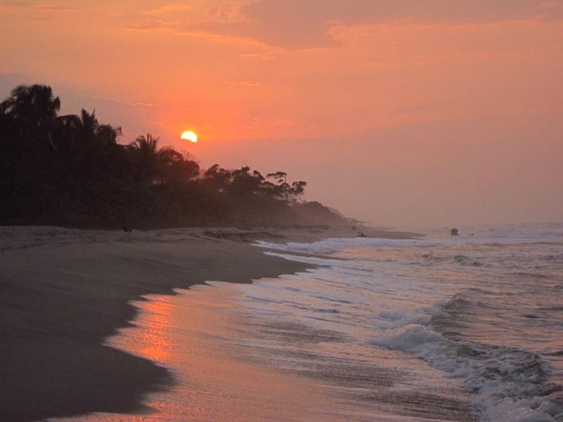 Palomino Sunset